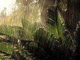 Тропический дождь в ваших руках!